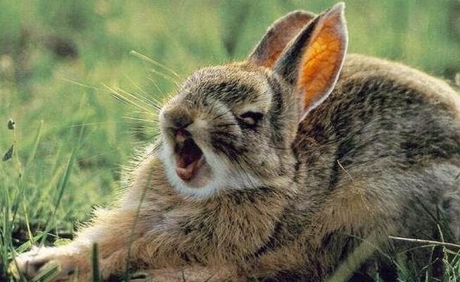 Смешные фотографии животных (стоп кадры, 128 невероятных снимков)