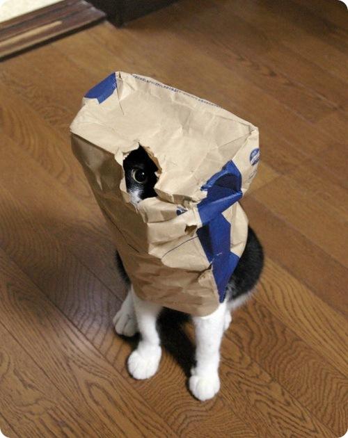 Смешные фотографии кошек (смотреть подборку)
